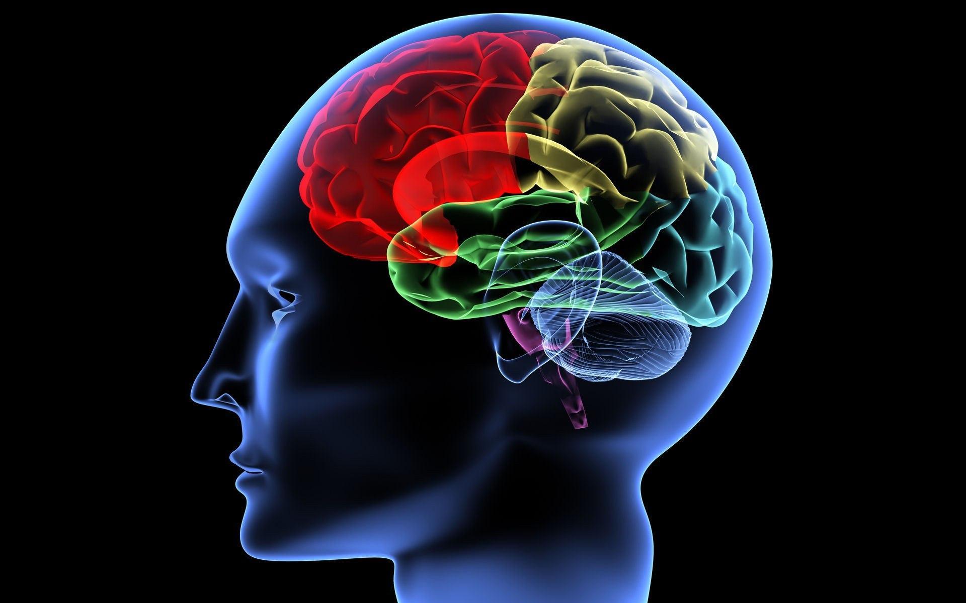 Как наш мозг принимает решения